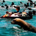 ADVENTURE AND ADRENALINE, SWIMMING WITH SEALIONS! & VISIT THE PERUVIAN ISLANDS!